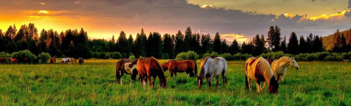 Paardenfokkerij Smilda Roderwolde